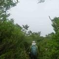 2012.07.29大山240ようやく歩き易くなりました