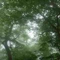 2012.07.29大山249木漏れ日の中を歩きます