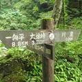 2012.07.29大山264川床へ0.2?16:40