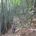 Photos: 竹林を下ります