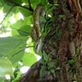 河原で遭遇したヘビ