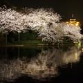 観桜の夕べ~横浜三溪園