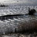 Photos: 荒ぶる風に眠る