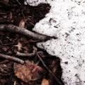 Photos: 春と冬の狭間で