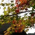 2221銀閣寺の紅葉