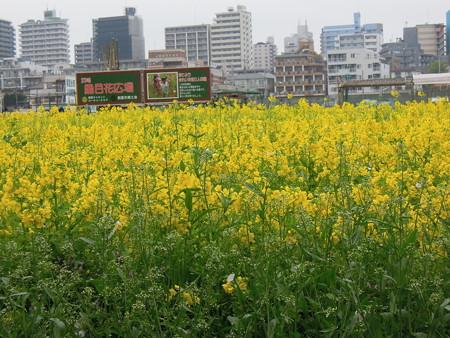 黒目川広場の花畑