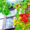 木造校舎の秋~今も昔も変わら秋彩2
