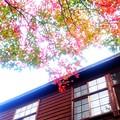 木造校舎の秋~今も昔も変わらぬ秋彩3