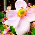木造校舎の裏庭に咲く