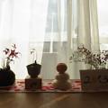 Photos: 正月飾り