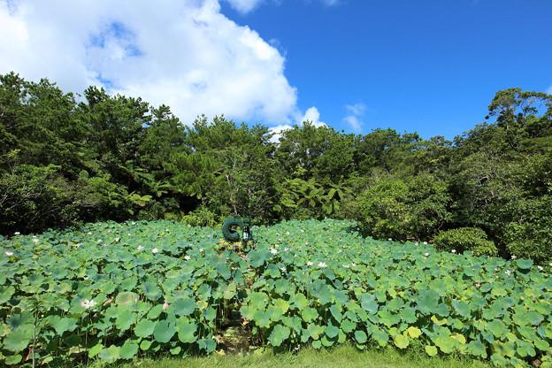 天染池(2013/08/07 ビオスの丘)