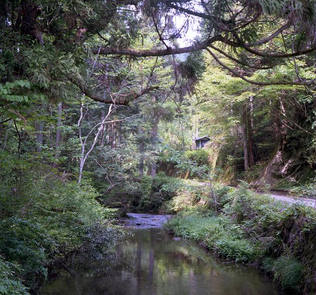 杉の森小川