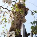 王子動物園 2013年春 13