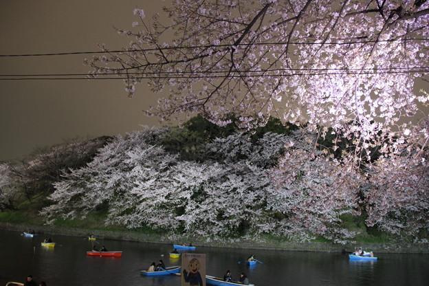 Photos: 夜桜14