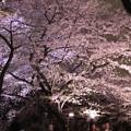 Photos: 夜桜18