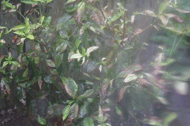 窓越しの大雨