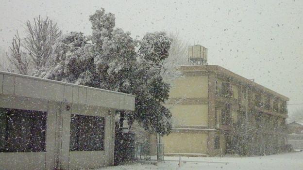 Photos: 大雪の『成人の日』