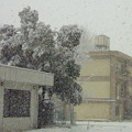大雪の『成人の日』