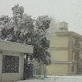 写真: 大雪の『成人の日』