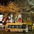 写真: 夜桜の下で…