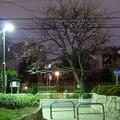 夜の染井界隈