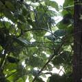 緑のシルエット