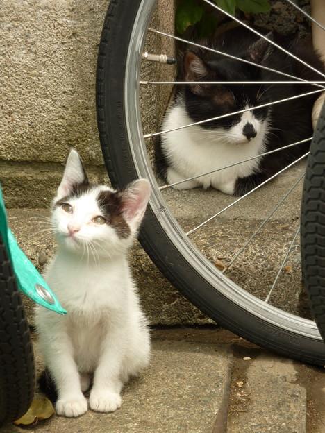 野良猫の親子(2)