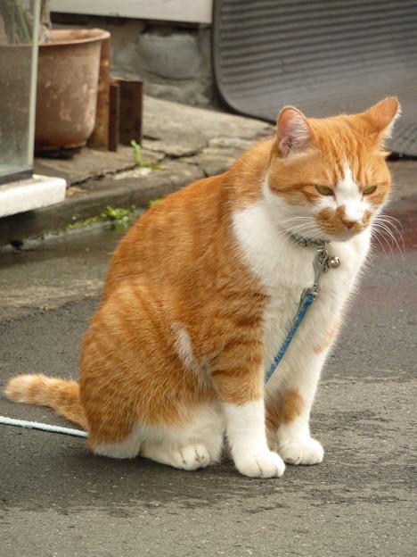 まねき猫!?(1)