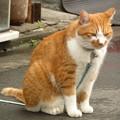 Photos: まねき猫!?(1)