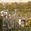 写真: 桜の時期から半年かァ…