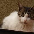 Photos: 屋根の上の野良猫(2)