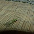 緑の虫の物語?(1話)