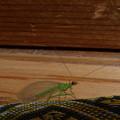 緑の虫の物語?(6話)