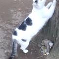 Photos: 公園の野良猫