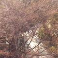 音無川の遊歩道