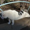 猫ですが…(^_^;)