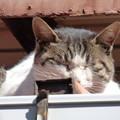 屋根の上の野良猫?