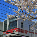 桜・A23T