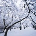 写真: 雪の公園