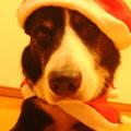 写真: 2012クリスマス