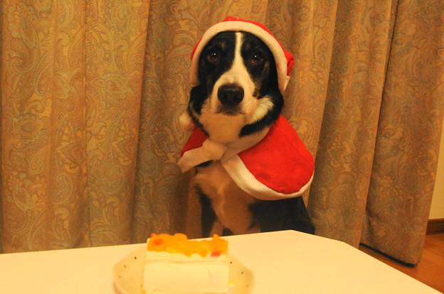 写真: 32012クリスマス