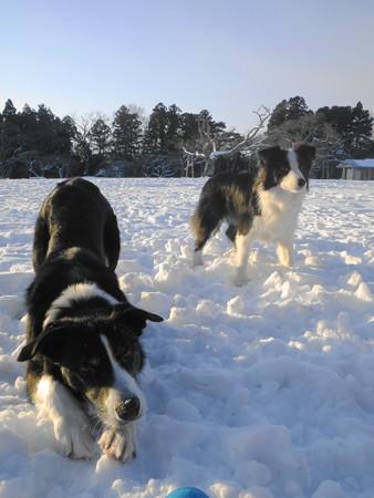 13・1・19 雪遊び1