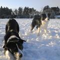 写真: 13・1・19 雪遊び1