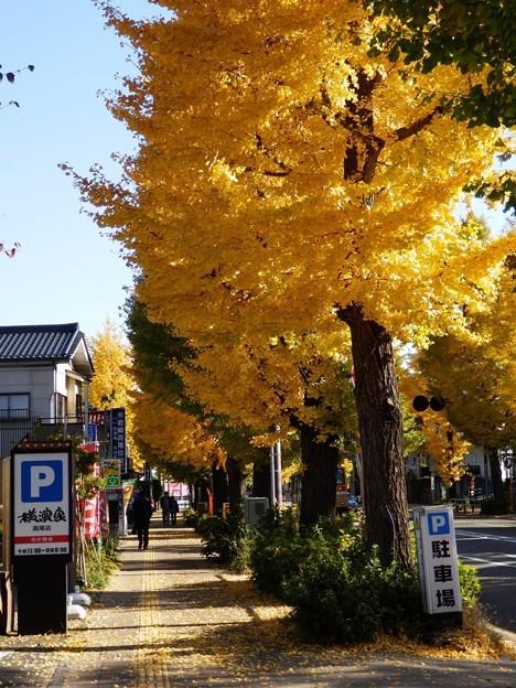 甲州街道のイチョウ並木<高尾駅周辺>(東京都八王子市)