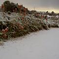Photos: 爪木崎の雪景色とアロエ(静岡県下田市)