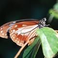 写真: 高尾山の蝶