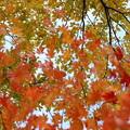 舞い散る秋