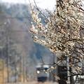 春行き列車