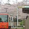 花見電車(3)