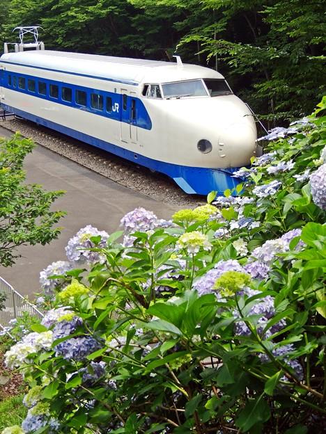 0系新幹線と紫陽花